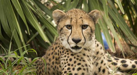 Brevard Zoo Will Lower Price of Admission To $5 For